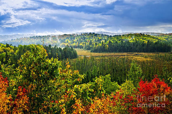 Autumn Poster featuring the photograph Fall Forest Rain Storm by Elena Elisseeva