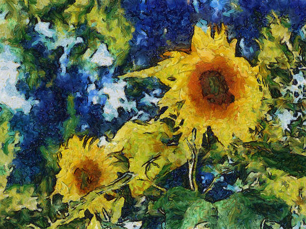 Sunflower Poster featuring the photograph Sunflowers by Michelle Calkins
