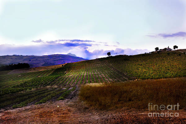 Land Poster featuring the photograph Wine Vineyard In Sicily by Madeline Ellis
