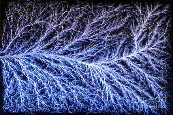 Lichtenberg Figure Poster featuring the photograph Electrical Discharge Lichtenberg Figure by Ted Kinsman