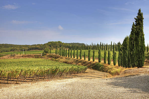 Vineyards Poster featuring the photograph Tuscany by Joana Kruse