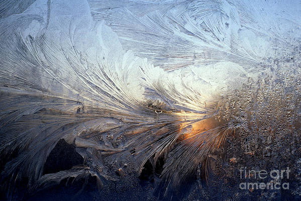 Frost Poster featuring the photograph Frost On A Windowpane by Thomas R Fletcher