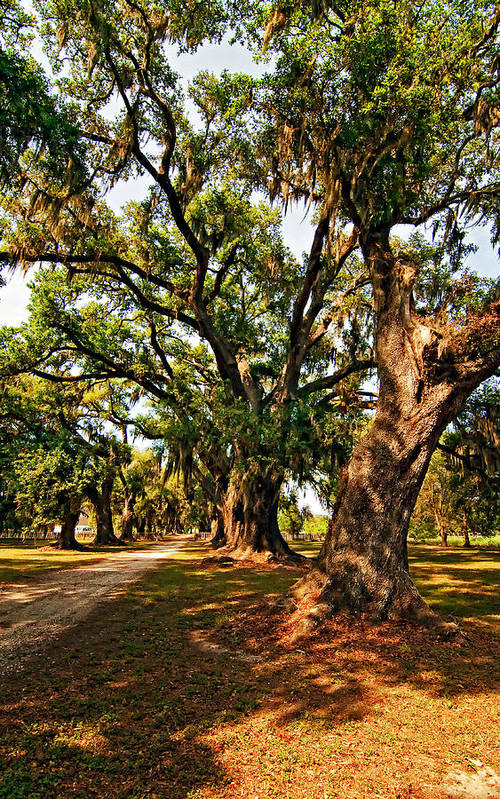 Evergreen Plantation Poster featuring the photograph A Southern Stroll by Steve Harrington