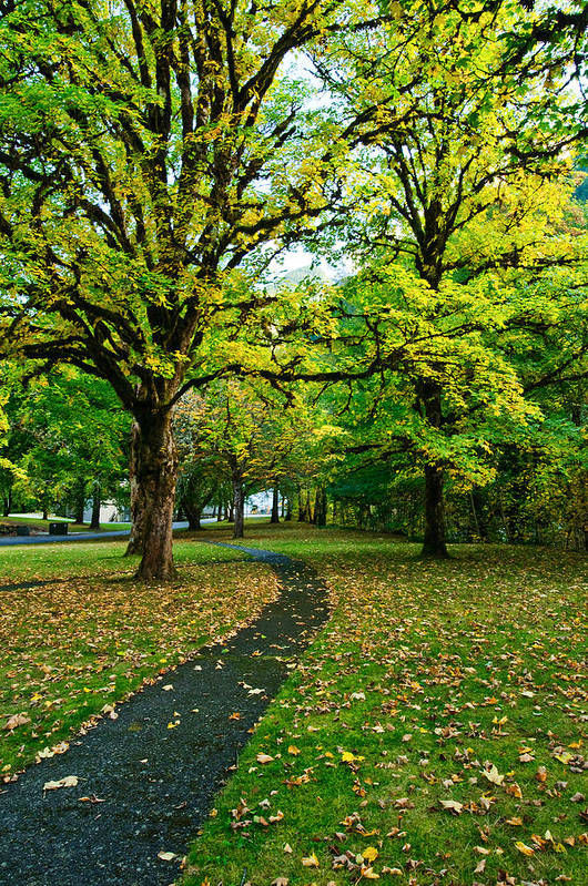 Fall Poster featuring the photograph A Walk In The Park by Dan Mihai