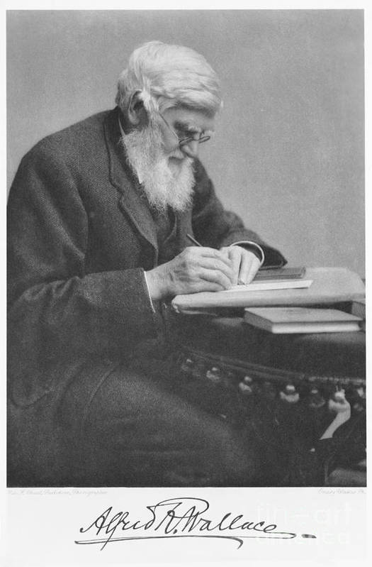 Alfred Russel Wallace Poster featuring the photograph Alfred Russel Wallace by Science Source