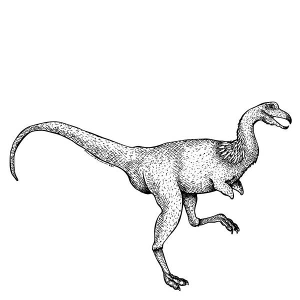 Cartoon Poster featuring the drawing Alvarezsaurus - Dinosaur by Karl Addison