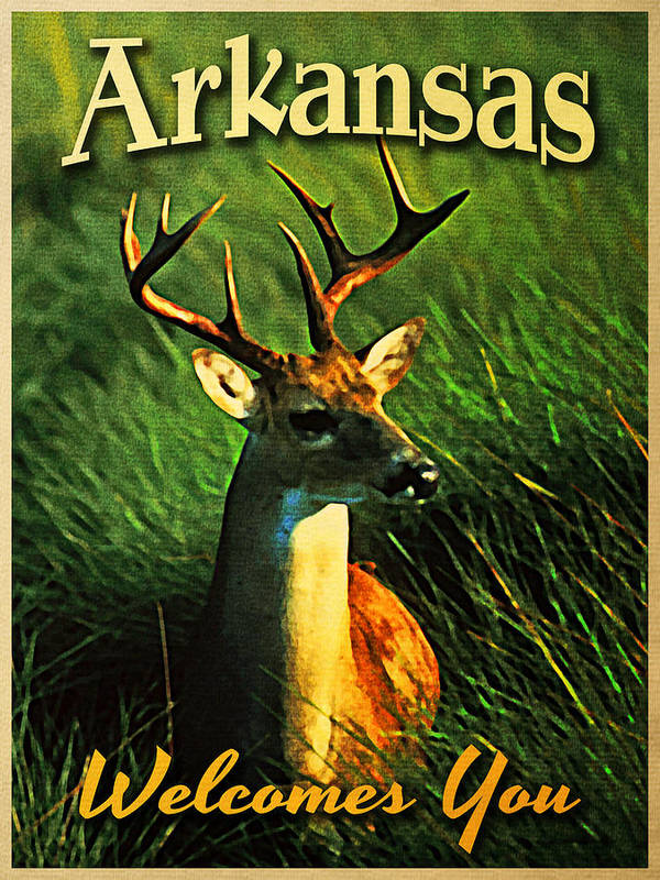Arkansas White Tailed Deer Poster by Flo Karp