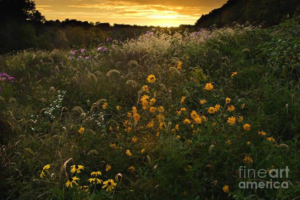 Sun Poster featuring the photograph Autumn Wildflower Sunset - D007757 by Daniel Dempster
