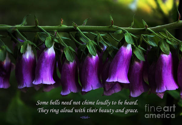 Foxgloves Poster featuring the photograph Bells Of Spring by Olahs Photography