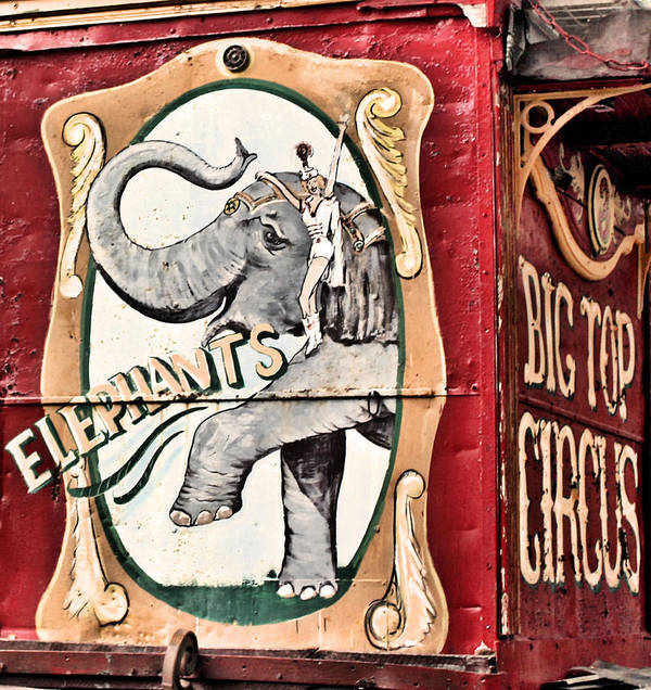 Big Top Circus Poster featuring the photograph Big Top Elephants by Kristin Elmquist