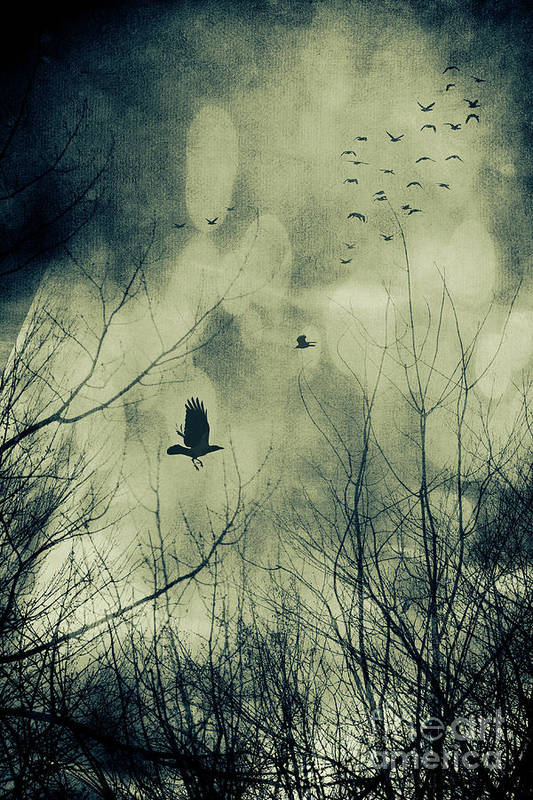 Atmosphere Poster featuring the photograph Birds In Flight Against A Dark Sky by Sandra Cunningham