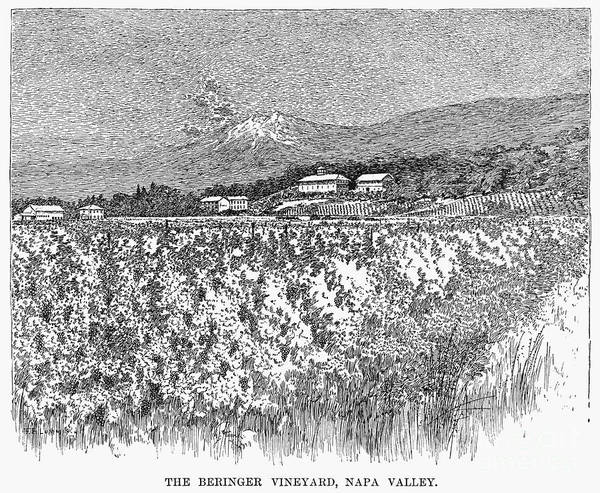 1889 Poster featuring the photograph California: Vineyard, 1889 by Granger