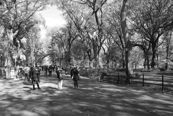 Black And White Poster featuring the photograph Central Park Mall In Black And White by Rob Hans