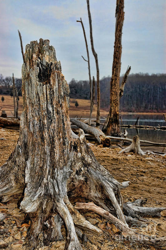 Dead Wood Poster featuring the photograph Dead Wood by Paul Ward