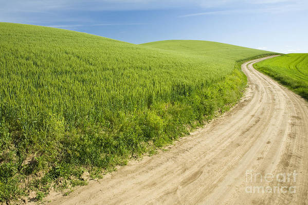 Agriculture Poster featuring the photograph Dirt Road Through Field, Palouse, Washington by Paul Edmondson