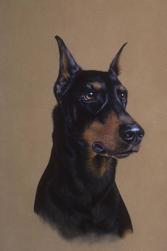 Dog Poster featuring the pastel Doberman Pinscher by Patricia Ivy