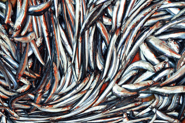 Horizontal Poster featuring the photograph Dripping Fish by Maria Luisa Corapi