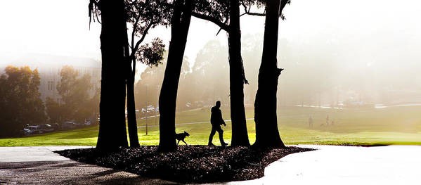 Walking The Dog Poster featuring the photograph Foggy Day To Walk The Dog by Harry Neelam