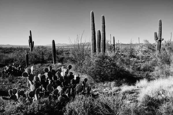 Late Winter Desert Poster featuring the photograph Late Winter Desert by Chad Dutson