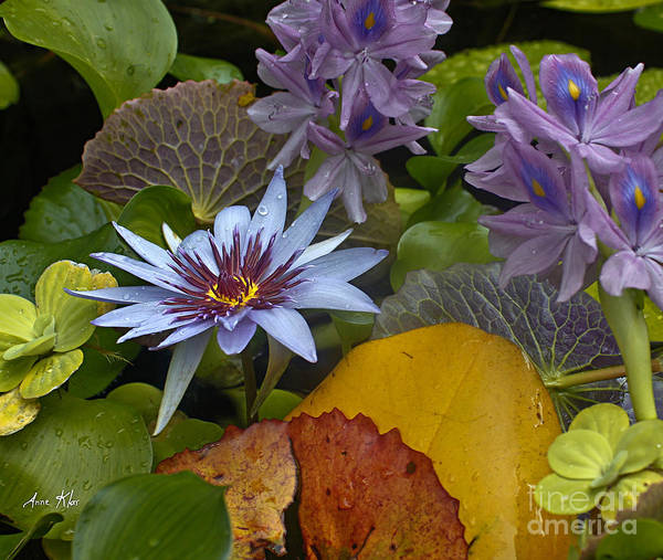 Blue Lilies Poster featuring the photograph Lilies No. 37 by Anne Klar