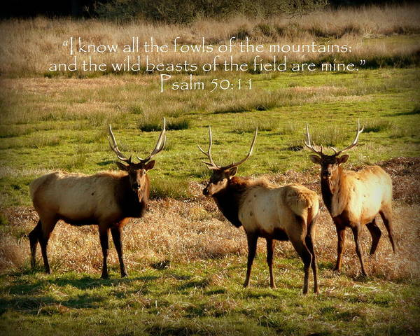 Cindy Poster featuring the photograph Magnificent Bull Elk Psalm 50 by Cindy Wright