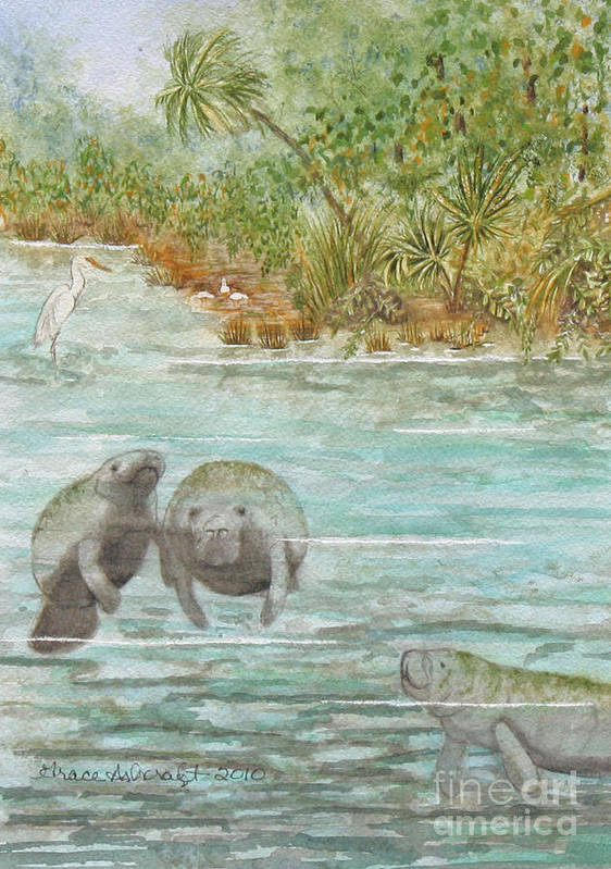 Manatee Poster featuring the painting Manatee by Grace Ashcraft