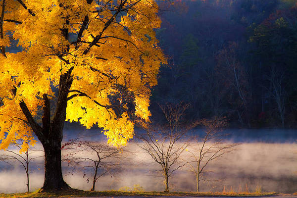 Beaver Lake Photographs Poster featuring the photograph Morning Maple Ll by Rob Travis