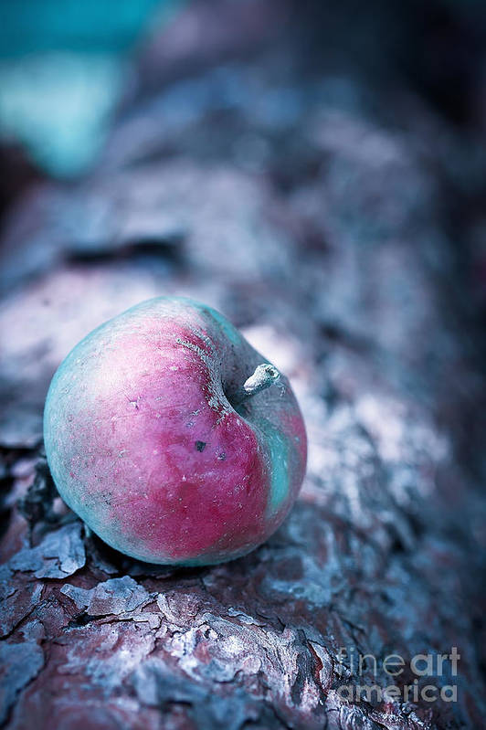 Apple Poster featuring the photograph One Appel A Day by VIAINA Visual Artist