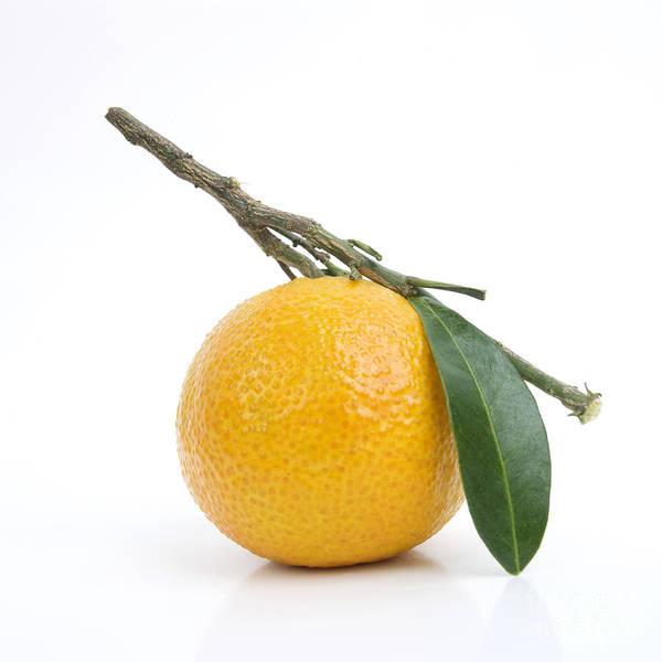 No People Poster featuring the photograph Orange Satsuma by Bernard Jaubert