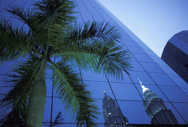 Photography Poster featuring the photograph Palm Tree And Reflection Of Petronas by Axiom Photographic