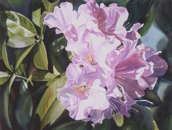 Pink Poster featuring the painting Pink Rhododendron by Sharon Freeman