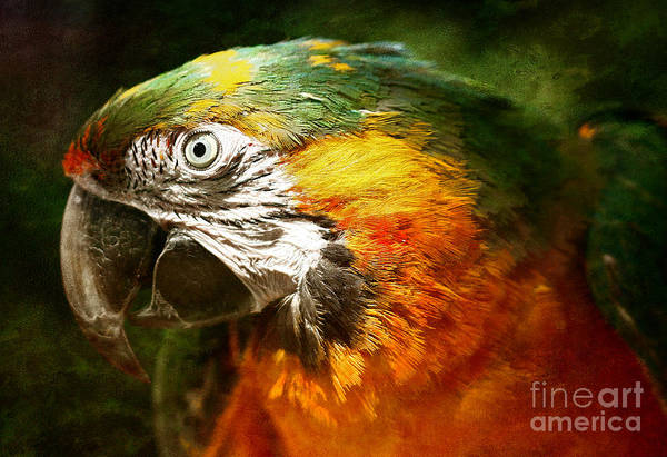 Parrot Poster featuring the photograph Pretty Polly by Lee-Anne Rafferty-Evans