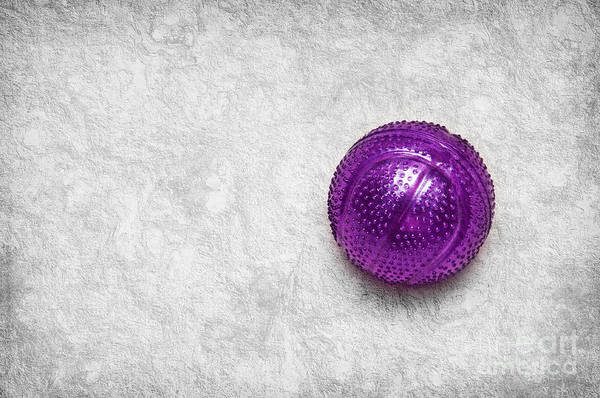 Purple Ball Cat Toy Poster featuring the photograph Purple Ball Cat Toy by Andee Design