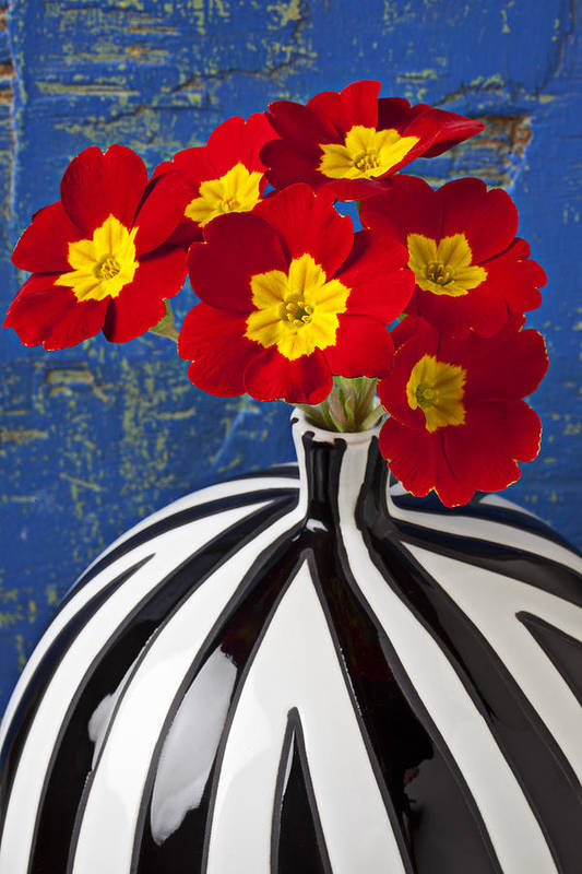 Red Poster featuring the photograph Red And Yellow Primrose by Garry Gay