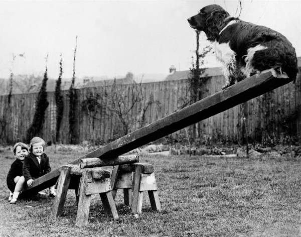 Child Poster featuring the photograph See-saw Dog by Fox Photos