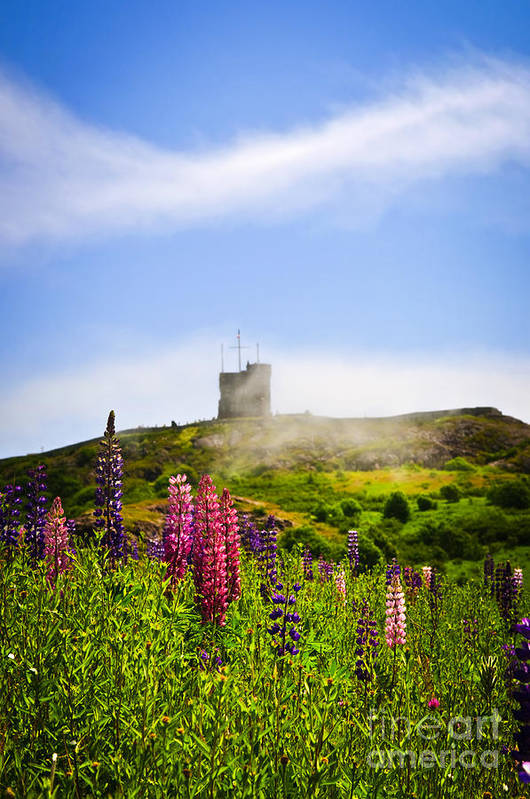 Signal Hill Poster featuring the photograph Signal Hill In St. John's Newfoundland by Elena Elisseeva