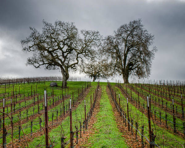 Sonoma County Poster featuring the photograph Sonoma County Vineyard by Joan McDaniel