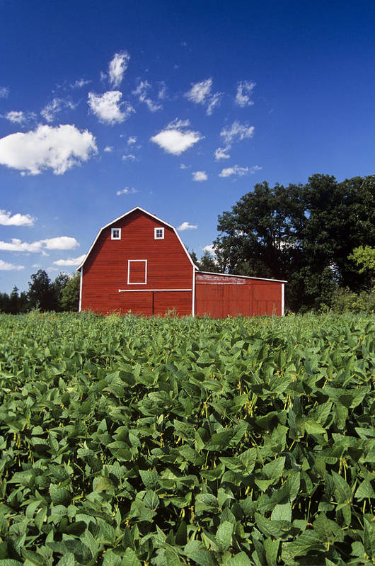 Anola Poster featuring the photograph Soybean Field And Red Barn Near Anola by Dave Reede