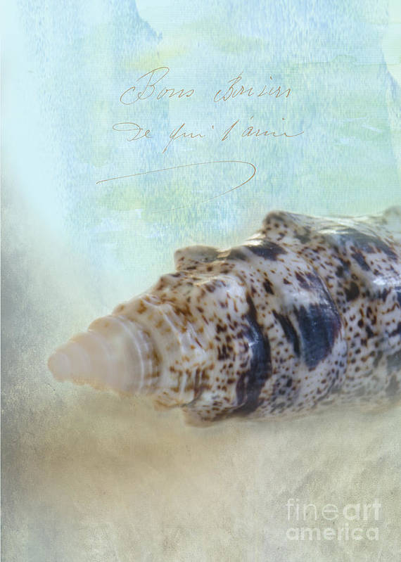 Sea Shell Poster featuring the photograph Spotted Auger Seashell by Betty LaRue