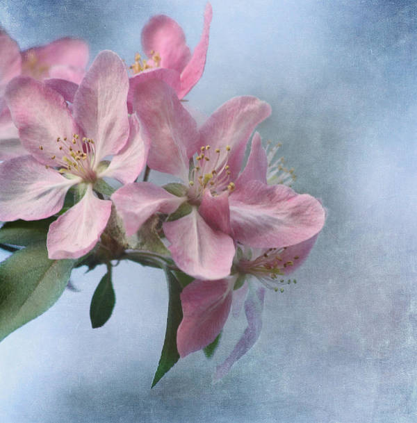 Flower Poster featuring the photograph Spring Blossoms For The Cure by Kim Hojnacki