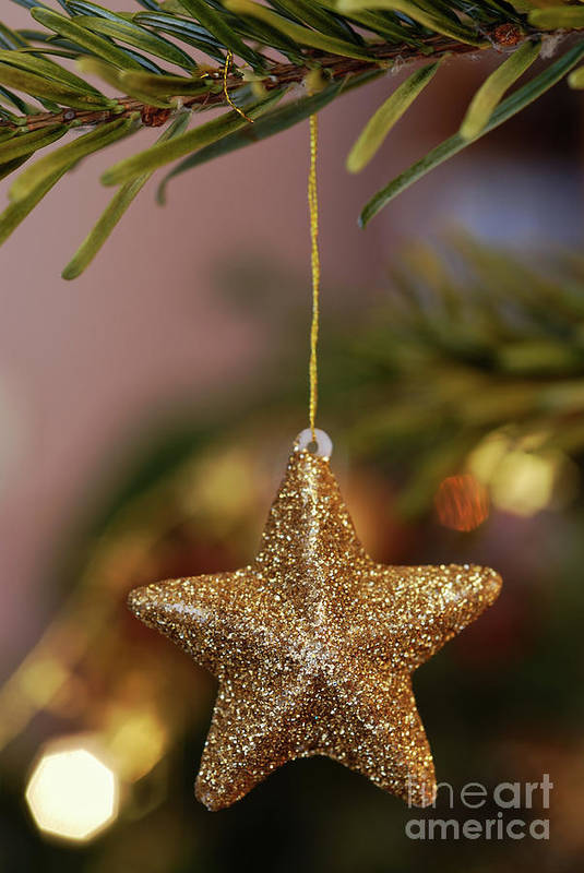 Creativity Poster featuring the photograph Star And Garland On Christmas Tree by Sami Sarkis