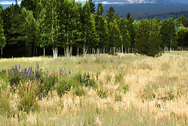 Landscape Poster featuring the photograph The Meadow Digital Art by Phyllis Denton