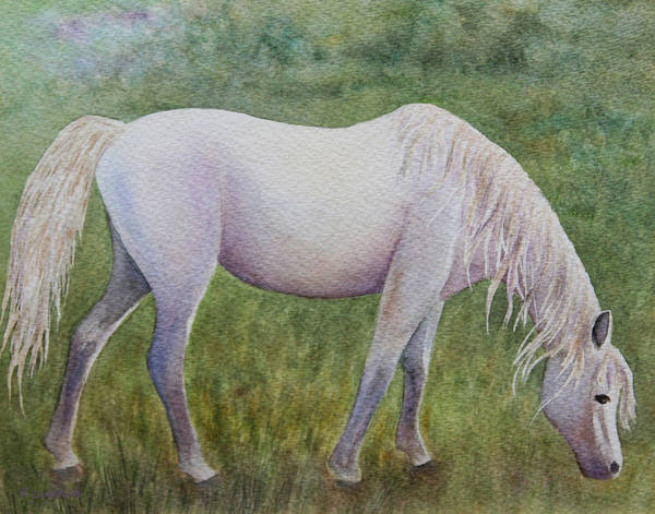 Horse Poster featuring the painting The White Horse by Kerri Ligatich