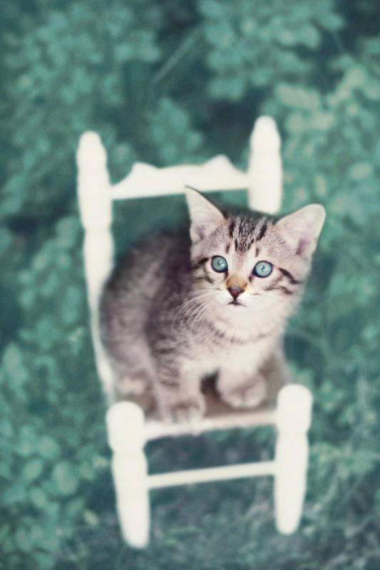 Kitten Photography Poster featuring the photograph Time Out by Amy Tyler