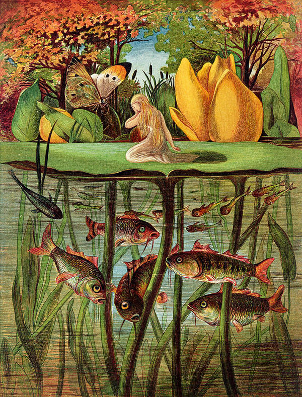 Fish; Carp; Goldfish; Pond; Butterfly; Under Water; Poucette Poster featuring the painting Tommelise Very Desolate On The Water Lily Leaf In 'thumbkinetta' by Hans Christian Andersen and Eleanor Vere Boyle