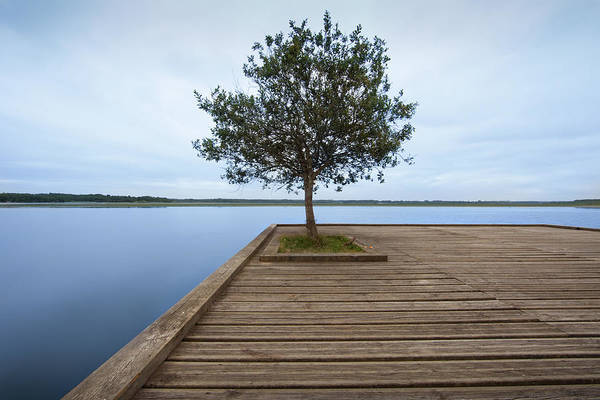 Horizontal Poster featuring the photograph Tree On Jetty by Billy Currie Photography
