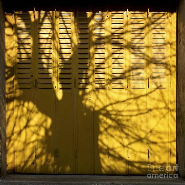 Bare Tree Poster featuring the photograph Tree Shadow by Bernard Jaubert