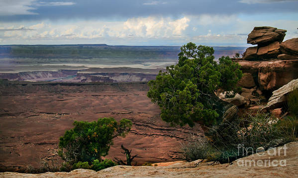 Panoramic Poster featuring the photograph View Of Canyonland by Robert Bales