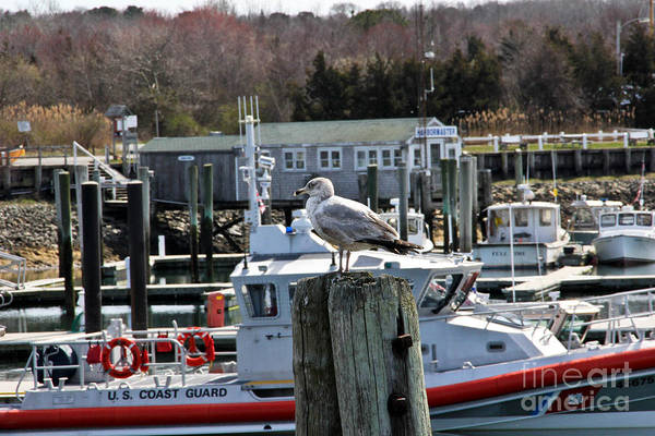 Cape Cod Poster featuring the photograph Watchful by Extrospection Art