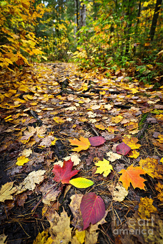 Autumn Poster featuring the photograph Path In Fall Forest by Elena Elisseeva